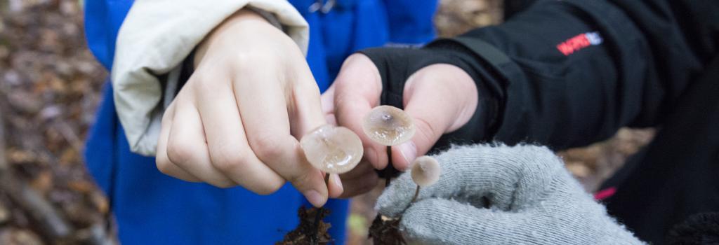 Børn med svampe