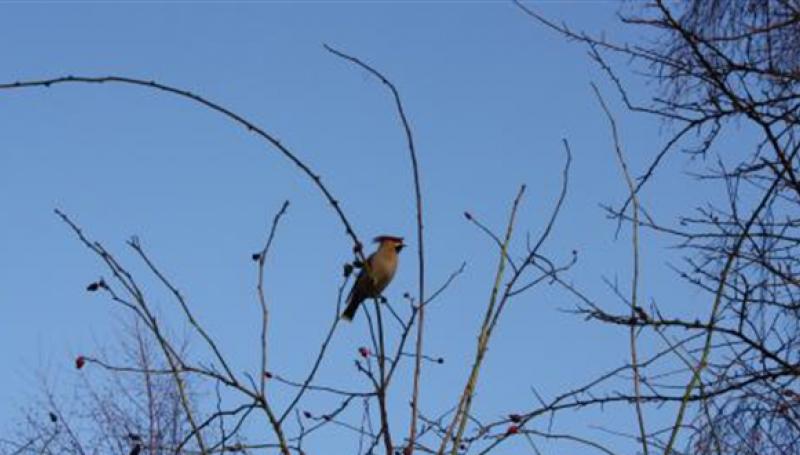 Fuglesafari