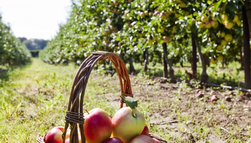 æblefestival